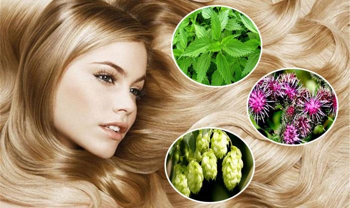 Травы для роста и укрепления волос