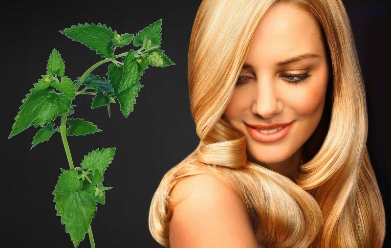 Лекарственные отвары и настои против выпадения волос