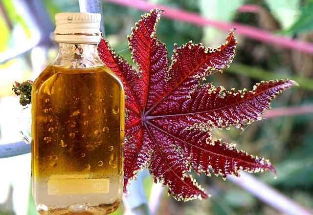 Касторовое масло – самое густое из растительных
